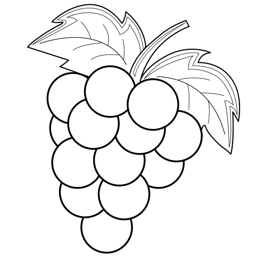 Grape Vine Coloring Pages