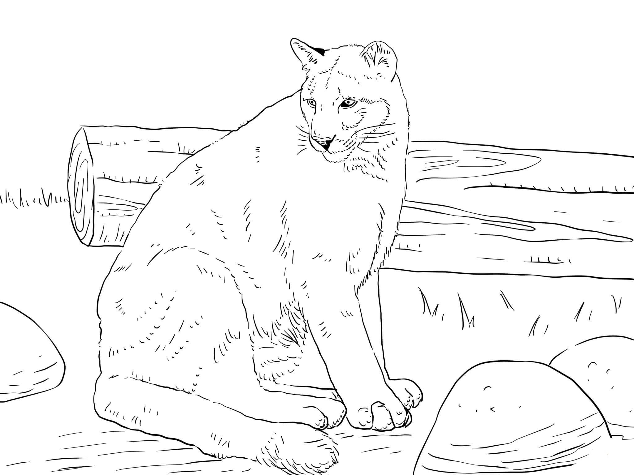 Puma Coloring Pages To Download And Print For Free