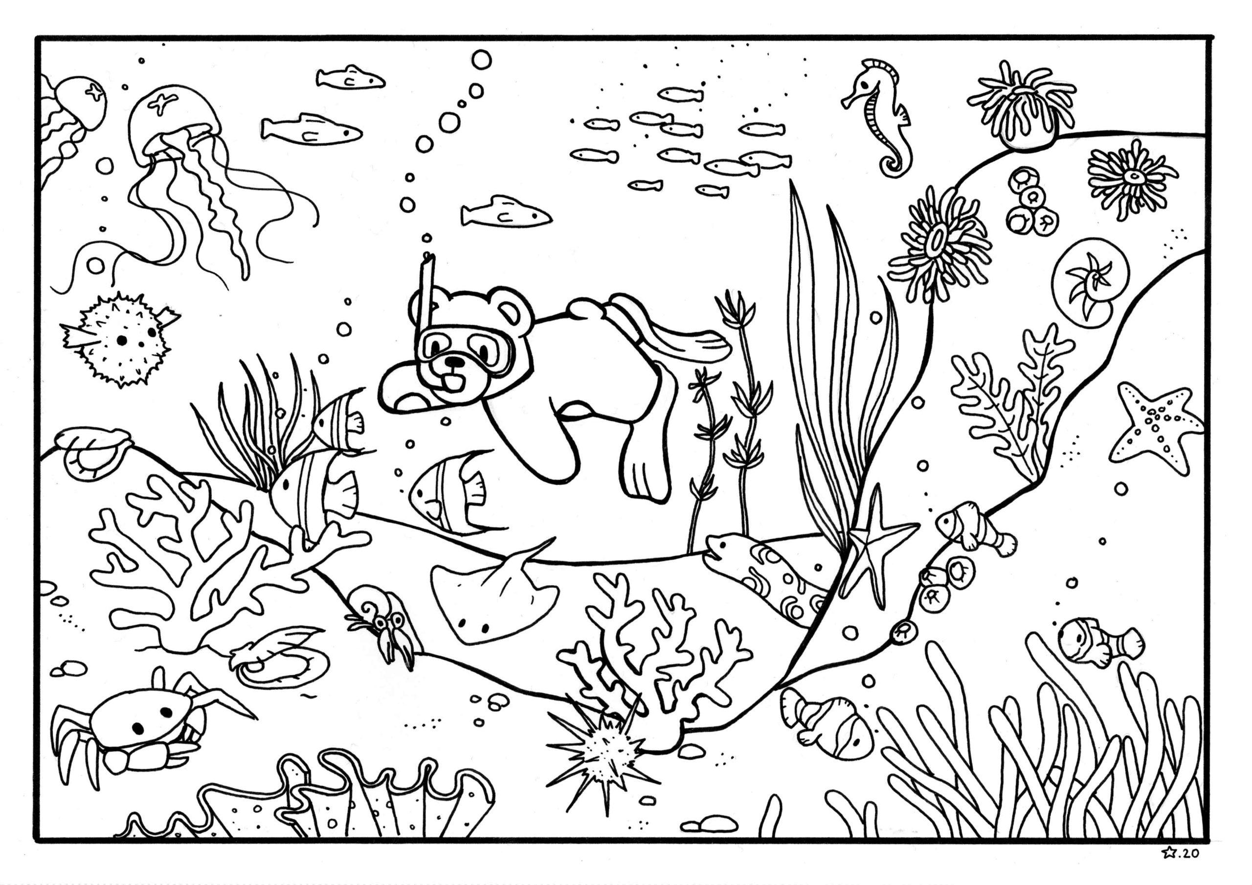 Illustration : coloriage de petit Nours qui fait de la plongée