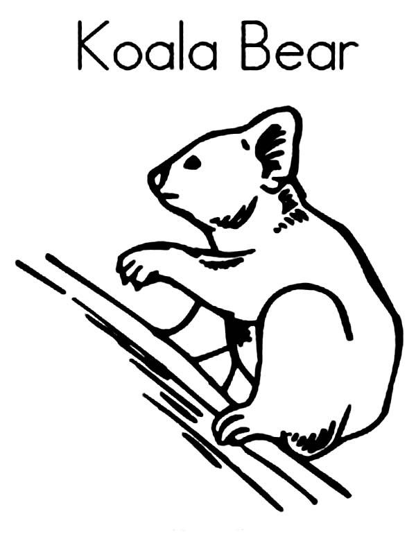 Koala Jenta