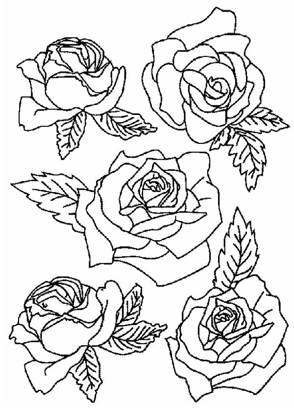 Picture Of Roses For Flower Bouquet Coloring Page : Color Luna