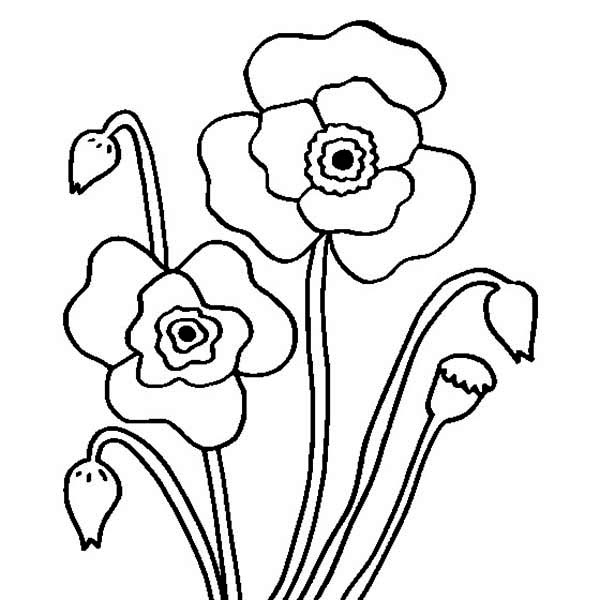Blossom Poppy Flower Coloring Page : Color Luna