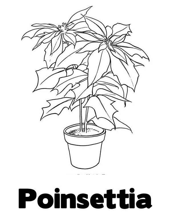 P Is For Poinsettia Coloring Page : Color Luna