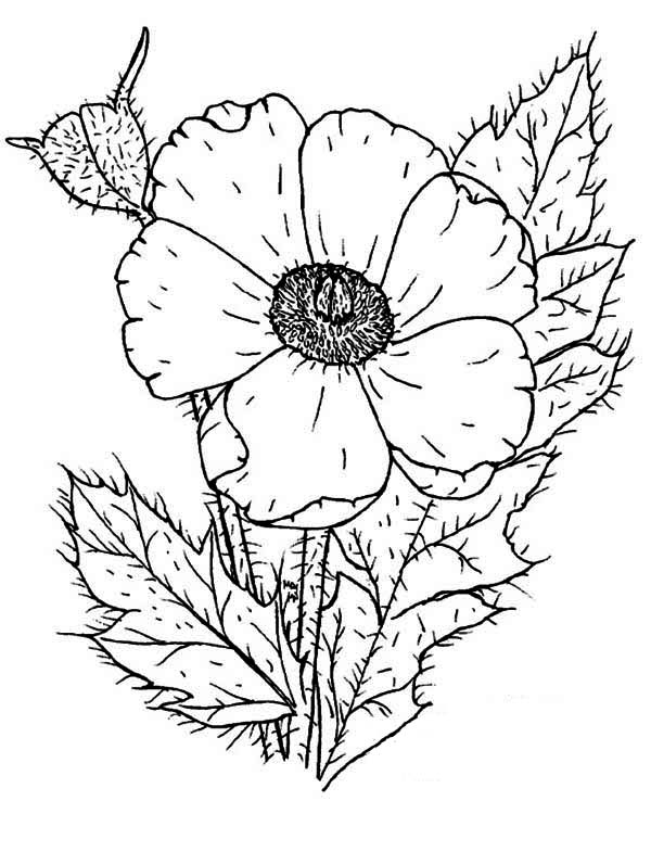 Photo Of Poppy Coloring Page : Color Luna