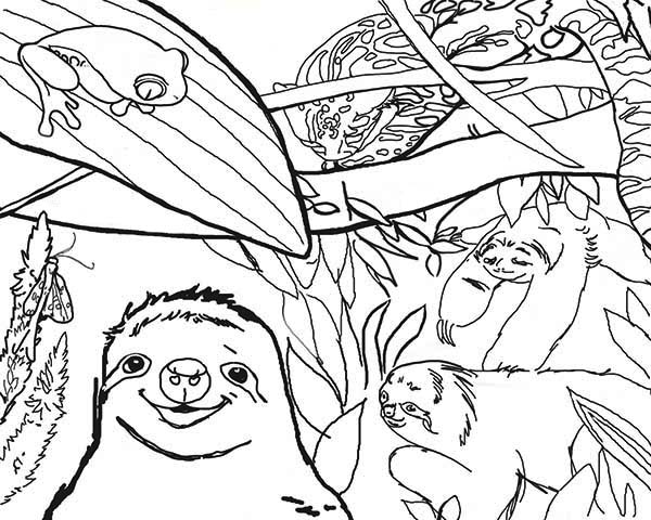 Sloth Live In The Jungle Coloring Page : Color Luna