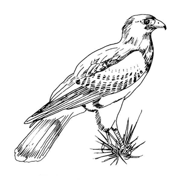 Awesome Picture Of Hawk Bird Coloring Page