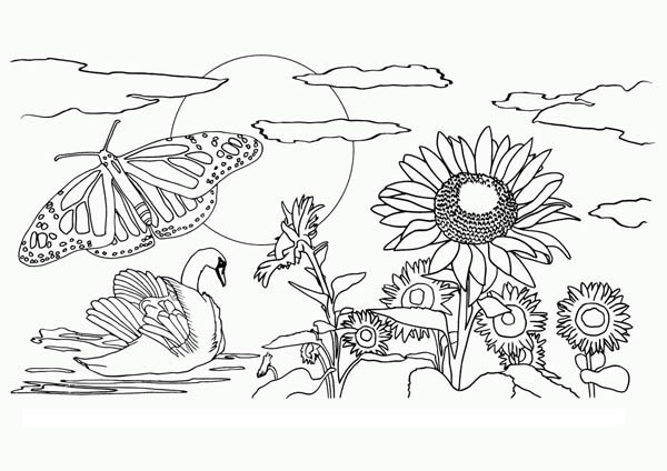 Beautiful View Of Nature Coloring Page : Color Luna