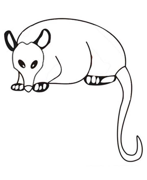 Possum Magic Coloring Page Coloring Coloring Pages