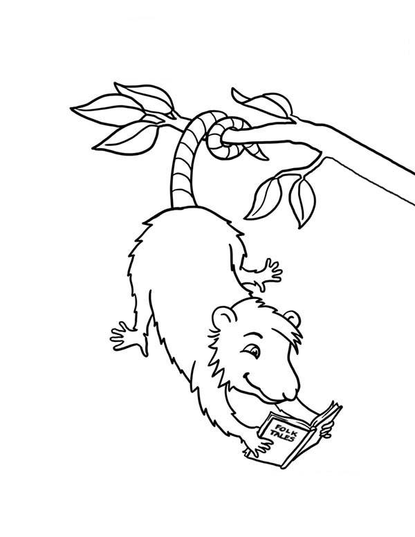 Possum Reading A Book Coloring Page : Color Luna