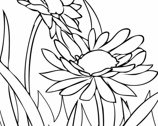 Spring Flower Daisy Coloring Page : Color Luna
