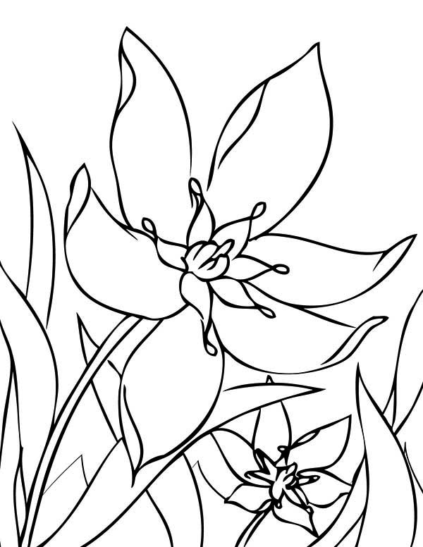Spring Flower In The Garden Coloring Page : Color Luna
