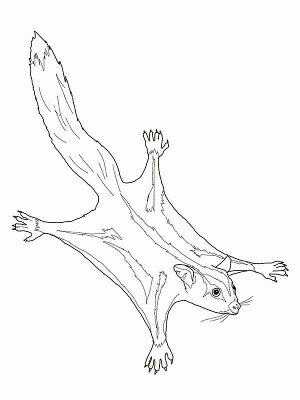 Sugar Glider Possum Coloring Page : Color Luna