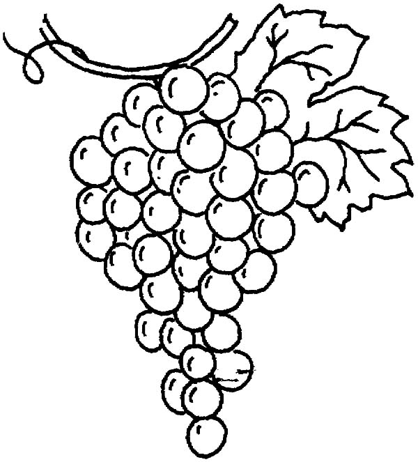 Drawing Grapes Coloring Pages : Color Luna