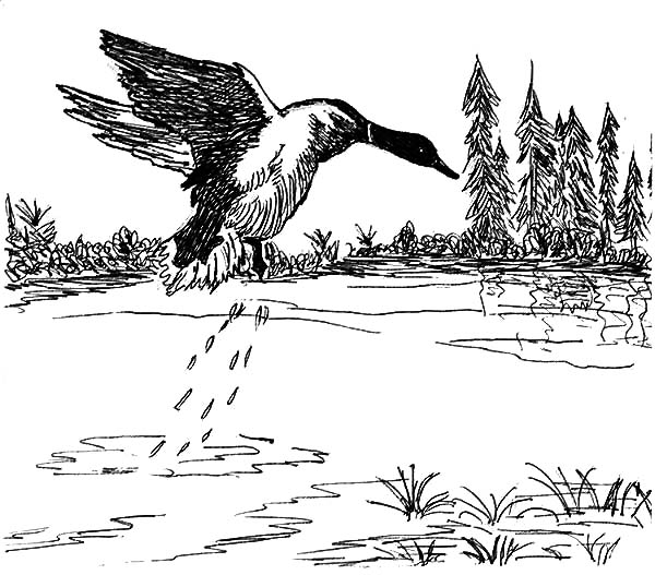 Mallard Duck Jumping From Lake Coloring Pages : Color Luna