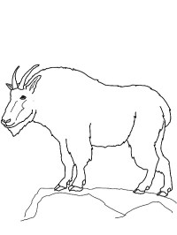 Mountain Goat Coloring Pages Mountain Goat Coloring