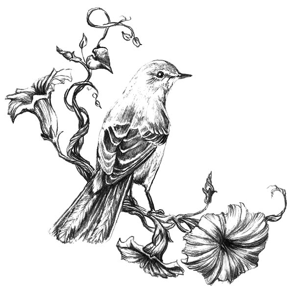 Painting Mockingbird Coloring Pages : Color Luna