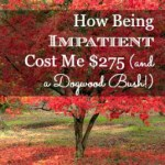 How Being Impatient Cost Me $275 (and a Dogwood Bush)