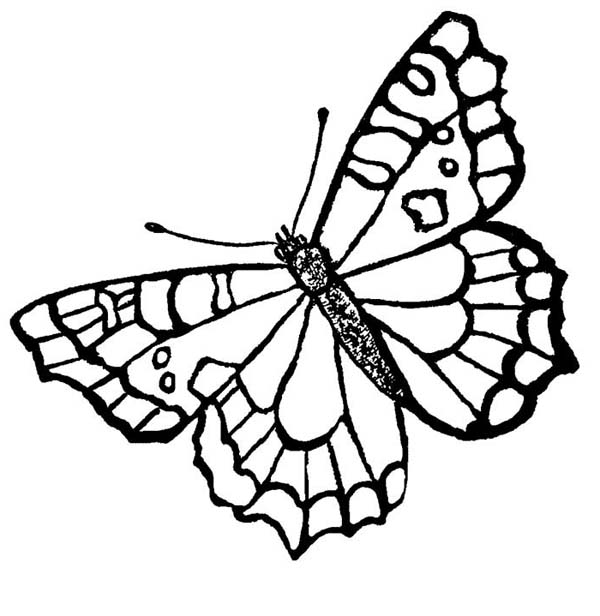 A Butterfly With Spotting Mark Wings Coloring Page