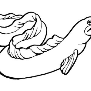 Smiling Whale with Blowhole Sea Free Coloring Page