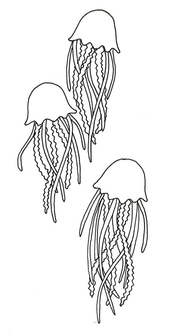 Beware Of Jellyfish Sting Coloring Page To Color