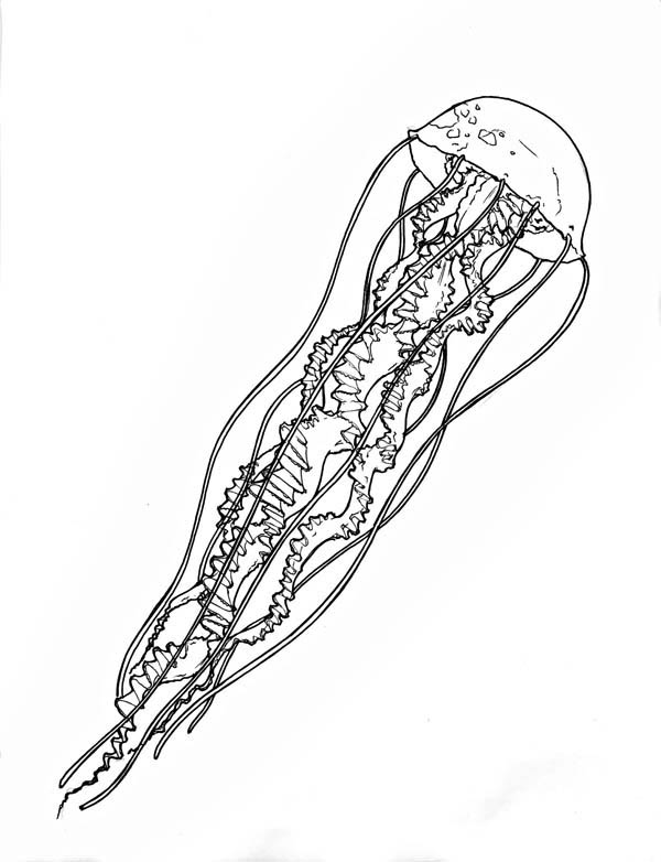very-log-spiral-tentacle-jellyfish-coloring-page.jpg