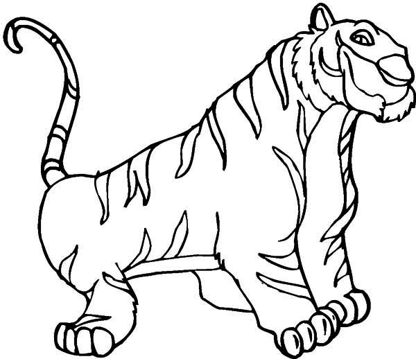 An Illustration Of White Siberian Tiger Coloring Page