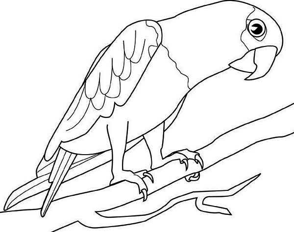 Big Parrot Coloring Page - Download & Print Online