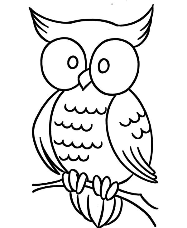 large eye owl coloring page  download & print online