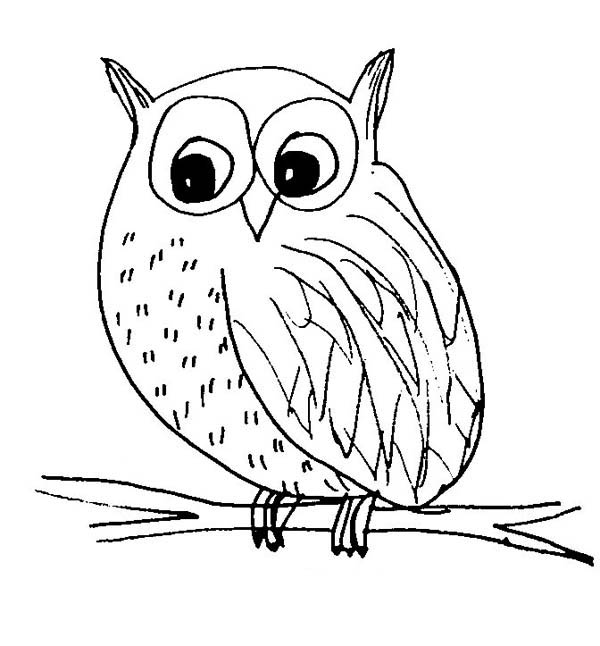 Snow Owl Sketch Coloring Page Download Amp Print Online