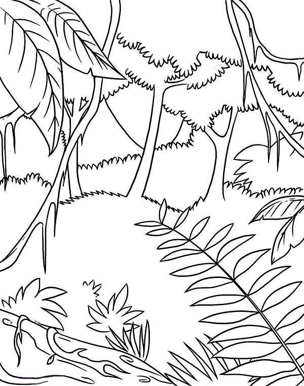 Awesome Tropic Rainforest Coloring Page Download Print Online Coloring Pages For Free Color Nimbus