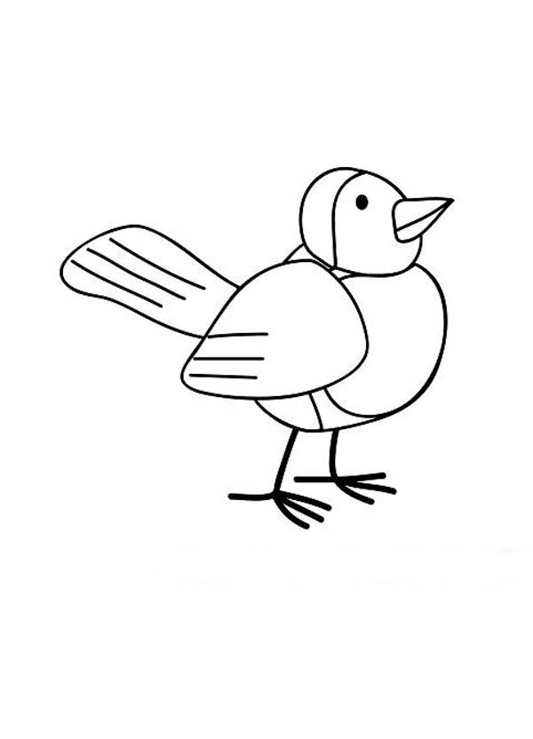 Robin Bird Drawing Coloring Page Download Amp Print Online