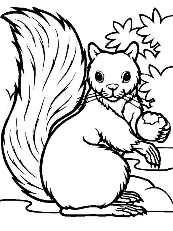 hungry squirrel eating coloring page  download & print