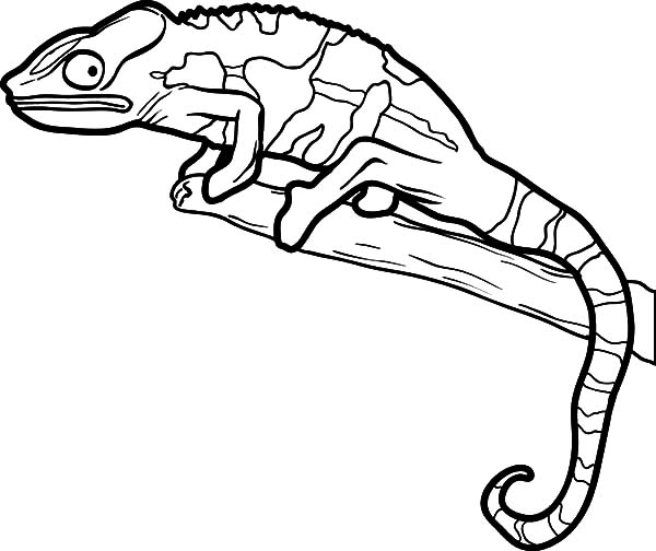 lizard coloring page # 13