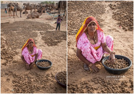A woman gathers camel dung to be burnt & used as fuel in Pushkar, Rajasthan