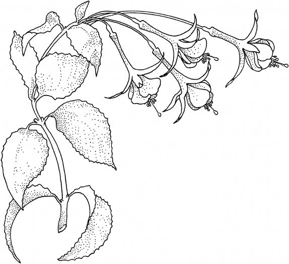 rainforest flowers coloring pages
