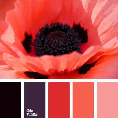 coral   2  6  Color Palette Ideas