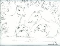goats sketch1001