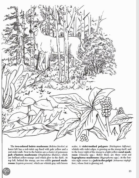 A brief history of adult coloring books