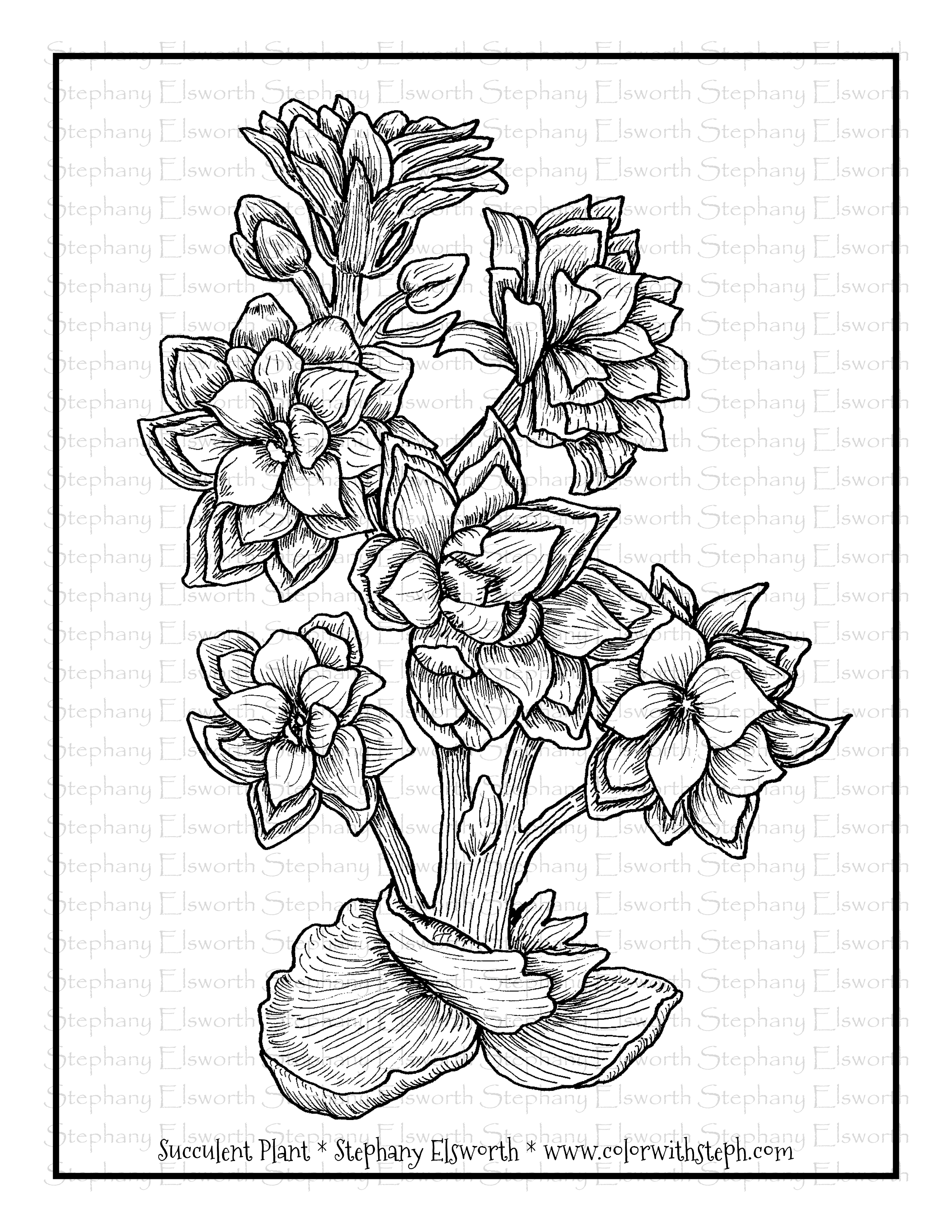 Succulent Plant Free Printable Coloring Page - Color with ...