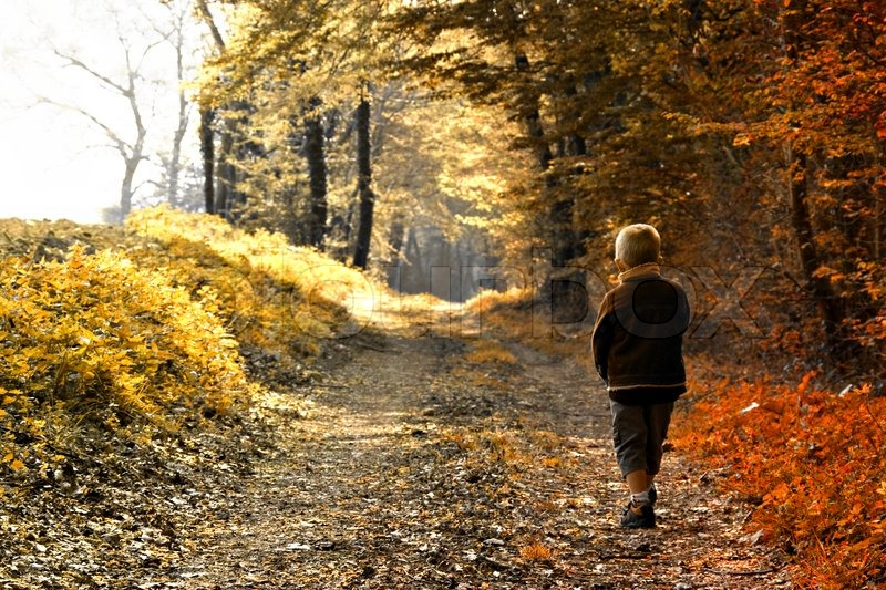 Lonely Little Girl Wallpapers A Young Child Walking In Forest Autumn Season Stock