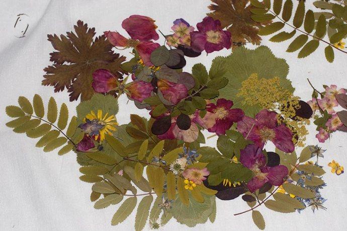 dryflowers1