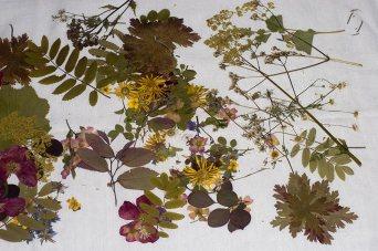 dryflowers2