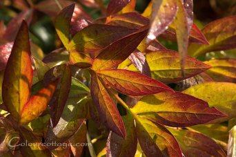 gardenfoliage03
