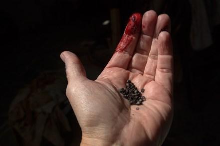 dried bugs