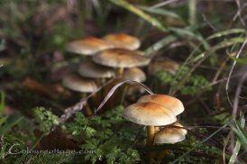 mushrooms04
