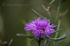 meadow16_05
