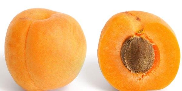 Apricot-orange-CCN