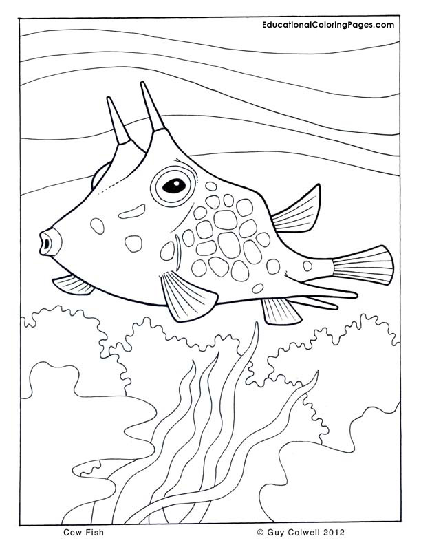1000+ images about Coloring Pages/LineArt Animals-Ocean