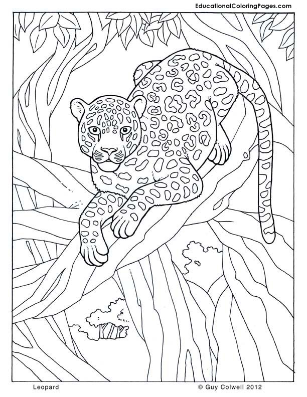 Preschool Zoo Series FREE Printables and Crafts: Big Cats