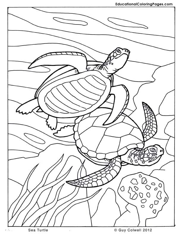 Sea and Seashore Book Two « Animal Coloring Pages for Kids